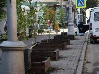 В Иркутске за лето высадят больше 8 тысяч молодых деревьев
