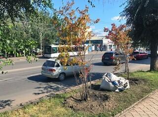 Для компенсационных посадок деревьев, оказывается, нет места