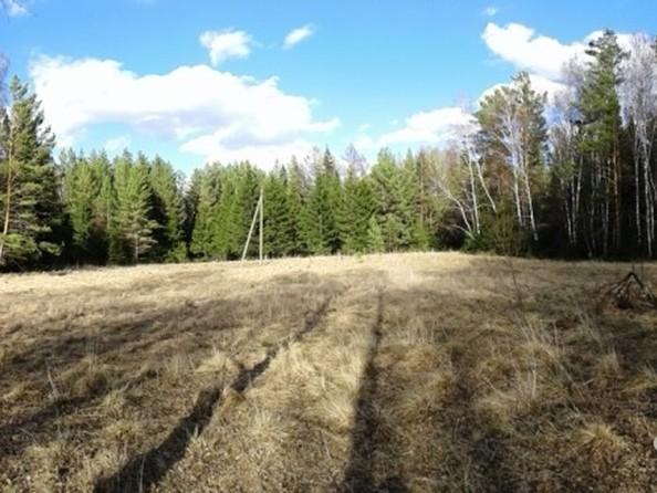 Продам  земельный участок, 35 соток, Емельяново. Фото 2.