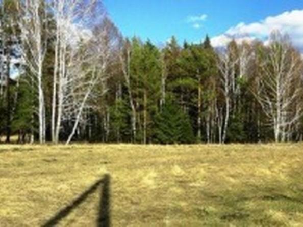 Продам  земельный участок, 35 соток, Емельяново. Фото 3.